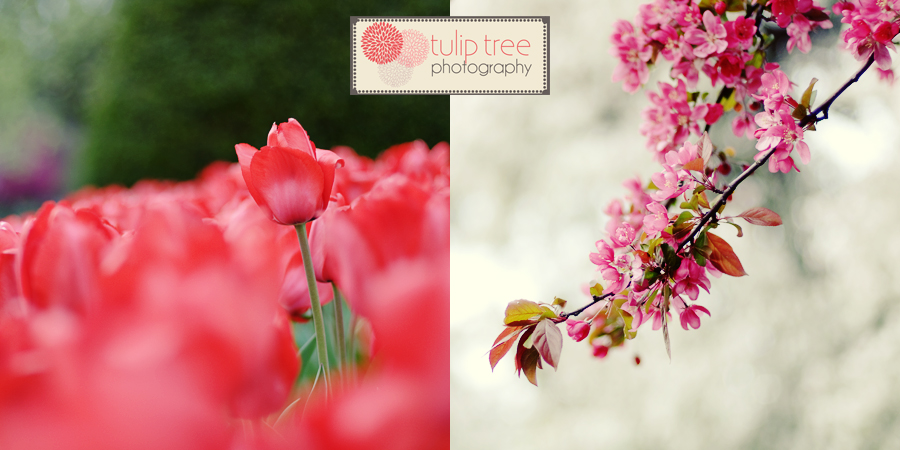tulip tree photography cape cod boston children photography cait photography